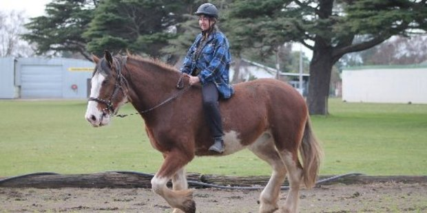 Robin Cornish trains Frankie to trot at the Dannevirke A&P Showgrounds Arena.