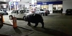 Watch: Hippo stops off at petrol station in South Africa
