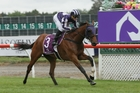 Bloodstream will have to lug 58.5kg over the 3200m distance of the Wellington Cup. Photo / Trish Dunell