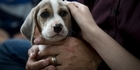 Watch: Watch: Super Beagles to patrol borders