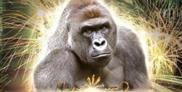 The earnest posts following Harambe's death were tweaked and twisted. A gorilla's fate. Thousands of grins. Photo / Twitter