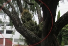 This is not where to put your old Christmas tree. Photo / Auckland Council