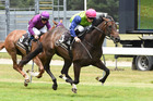 Padraig muscles his way to the line in the Provedoring 2YO Premier at Trentham on Saturday. Photo / Race Images