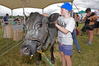 Noah Brenchley, 10, was excited to pat a cow for the first time. Photo / George Novak