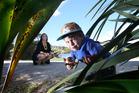 Kendyl Van Dragt and her son Jacob, 3, who have joined a new craze called Tauranga Rocks. Photo/John Borren.