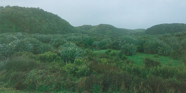 The Westport Works Quarry area that Holcim has restored back to indigenous vegetation. Photo / File