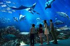 One of the huge tanks at Sentosa's S.E.A Aquarium in Singapore. Photo / Supplied