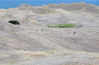 MetService says the rain due to fall on Northland will be enough to wet the land, but not stave off a drought. Photo / File