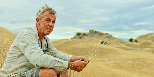 Hawke's Bay farmer Bruno Chambers said these persistent dry winds are unforgiving and could cause challenges in the future. Photo/Warren Buckland.