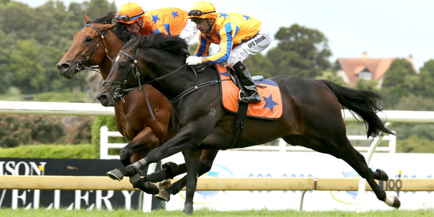 Xtravagant (outer) could target the NRM Sprint at Te Rapa next month or go to stud.
