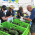 Avocados were in good supply for people to buy at the festival.