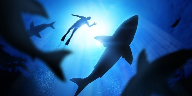 Swimming with sharks seems to me to be an utterly senseless affair. Photo / 123RF