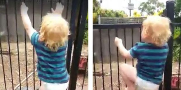 Loading Two-year-old Brodie Atkinson showed off his climbing skills, scaling the family's pool fence in 21 seconds.