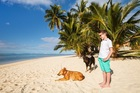 Well-meaning tourists often kidnap owned dogs out of misplaced kindness. Photo / 123RF
