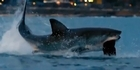 Watch: Michael Phelps loses 'race' against great white shark