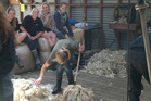 The woolshed continues to be one of the main training grounds for Ag Challenge students.