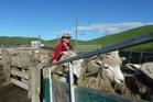 Kathy Barrett working on the farm,