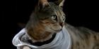 Watch: Bay cat shot, loses leg