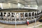 Rabobank predicts slow milk production growth for the next four years will make companies wary about investing in processing expansion.