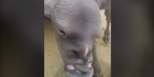 Watch: Goat-like creature with human features goes viral