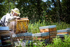 Police say beehive thefts have increase in the Western Bay. Photo/Gettys