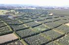 An aerial view of King Avocado's 160ha orchard north of Waiharara.