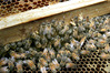 A man facing charges relating to beehive theft has been remanded on bail without plea. Photo/file