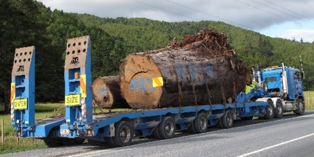 Ancient swamp kauri is not subject to the Protected Objects Act