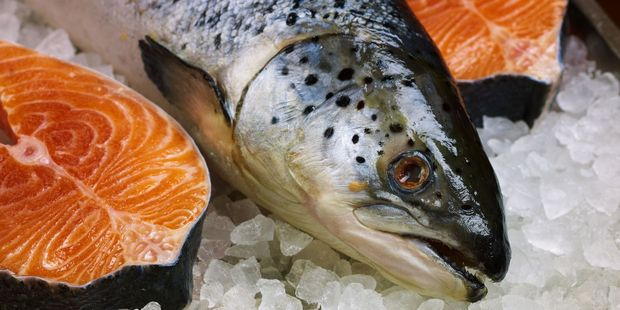 New Zealand King Salmon want thousands of salmon to be moved in the Marlborough Sounds for environmental reasons. Photo / 123RF