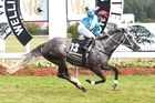 Rosie Myers and Thee Auld Floozie sail to victory in the Thorndon Mile at Trentham. Photo / Race Images.