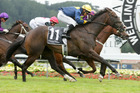 Signify won the $250,000 Berkett Telegraph. Photo / Racing Desk