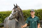 Frankel colt going up to auction at next week's yearling sales, with his groom Liam Cunningham. Photo / Supplied