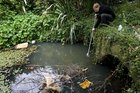 Omaru Creek, Glen Innes, in 2007. Has nothing changed in 10 years? Photo / Richard Robinson
