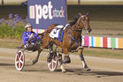 It was a stroll in the park for Smolda, who easily won the Ballarat Cup on Saturday night. Photo / Stuart McCormick