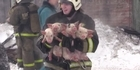 Watch: Watch: 150 piglets saved by firefighters in Russia
