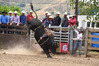 WILD RIDE: Ernie Rika (Rotorua) competing in the Open Bull Ride at the 2017 Wairoa A&P Rodeo. PHOTO/SUE WILSON.