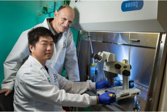 Salk Institute scientists Jun Wu (seated) and Juan Carlos Izpisua Belmonte, wrote the Cell paper. Photo / Salk Institute