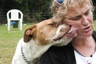 Changes in the way dog control services is funded splits opinion in Otorohanga 