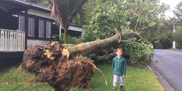 Stuart Chapman sent in photos of a tree in Titirangi that was completely uprooted, seriously damaging a car.