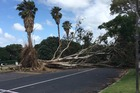 One tree uprooted in Dunkirk Road, Panmure. Photo / Cameron Carter