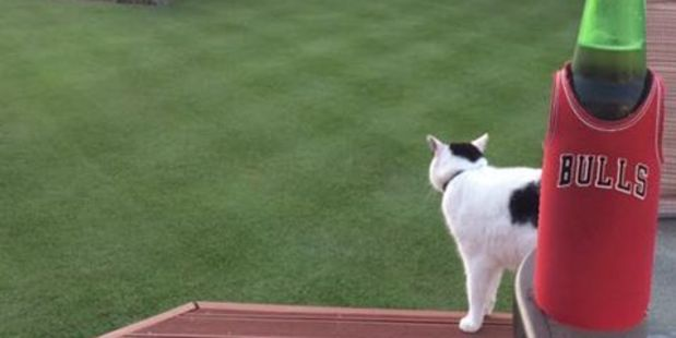 Matthew Spraggs catches the cat checking out his lawn. Photo / Facebook