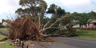 View: Storm damage from around Auckland