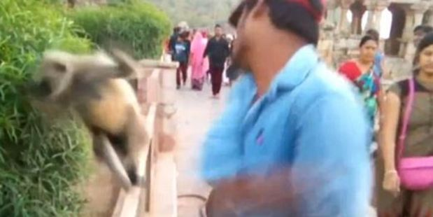 Loading The man the animal hard in the face before running away as his friends laughed at him. Photo / Youtube