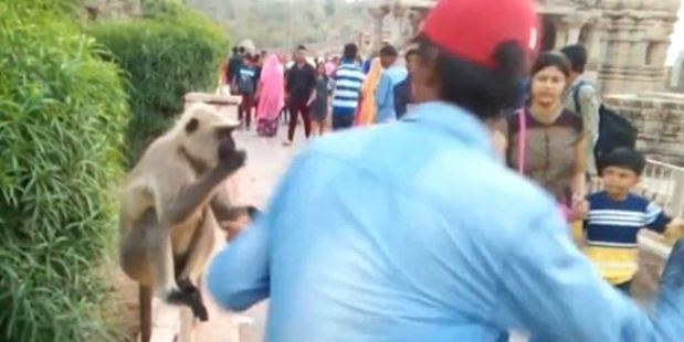The thug hit the monkey while it sat in Mandore Gardens in Jodphur, India. Photo / Youtube