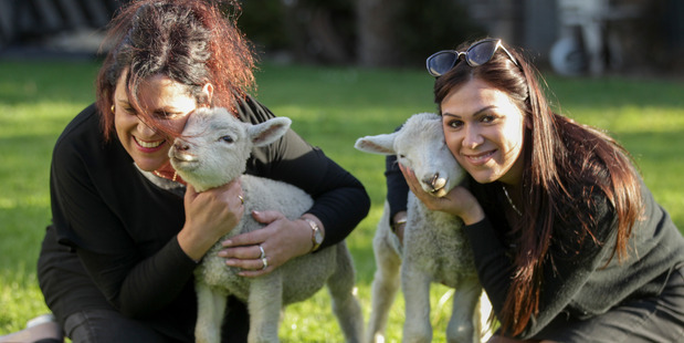 Alexia Barbarouses holds Pantelidis and her mother, Maria Barbarouses, holds Willis. The two lambs were stolen but  later returned. Photo/Warren Buckland