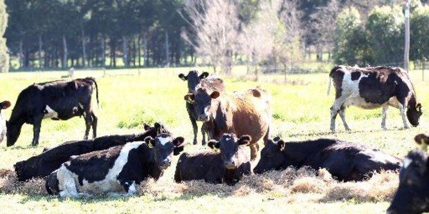 Beef + Lamb will establish a Future Farm in Northland.