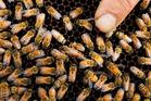 September was Bee Awareness Month.