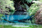NZ Pure Blue Springs Ltd told Waikato Regional Council today that  it would not go ahead with the resource consent application to take 6.9 million litres a day from Putaruru's Blue Spring. Photo / File