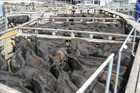 The lack of numbers is keeping the store cattle market upbeat, while sheep markets slows.