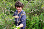 Entomologist Jenny Dymock with a Cable Bay lantana plant showing the damage done by a biocontrol fungus.
